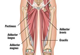 Hip Adductor Strain